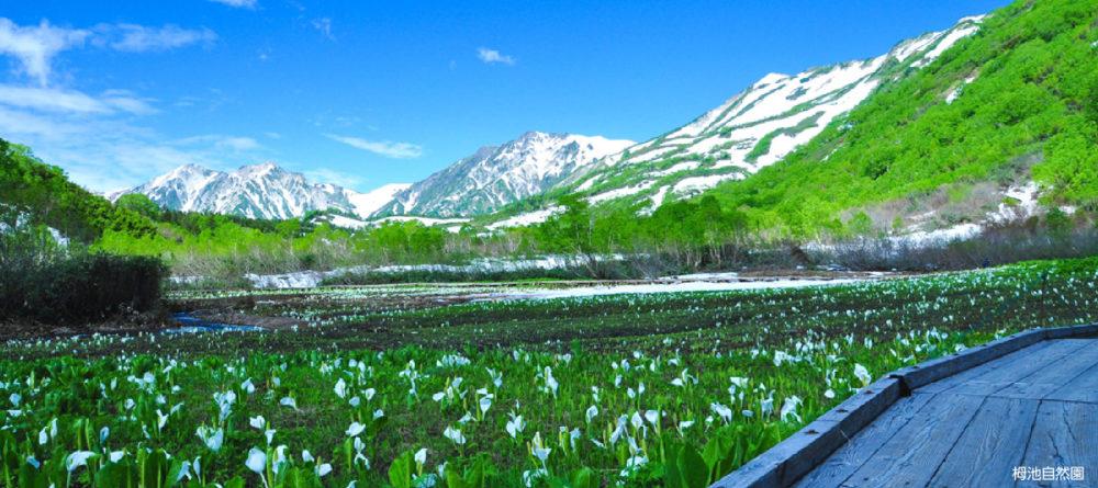 お手軽トレッキングパック 栂池高原(弁当・栂の湯温泉付)