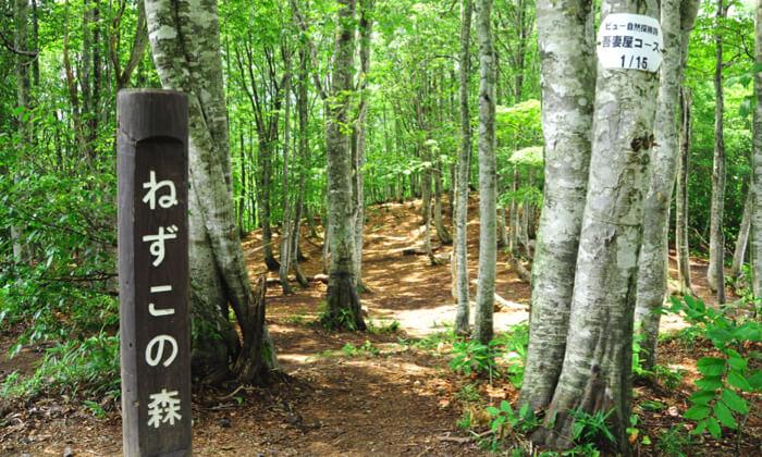 お手軽トレッキングパック 白馬岩岳(食事券・岩岳の湯温泉付き)